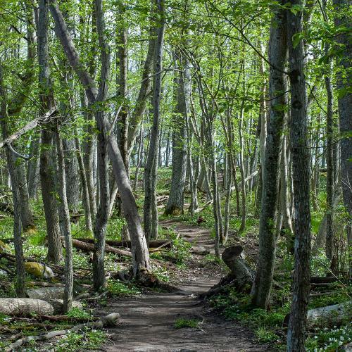 Stigarna på Eldgarnsö naturreservat är valtrampade och lätta att gå