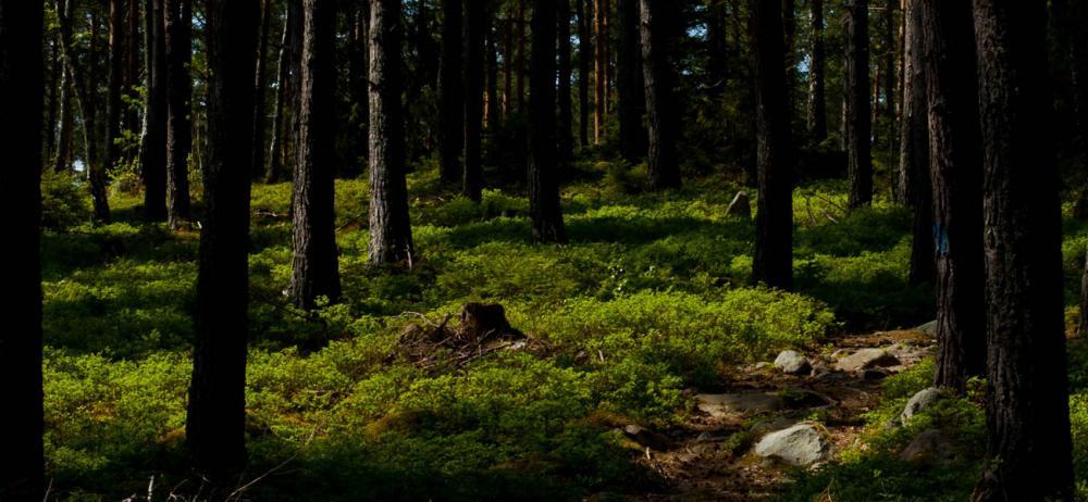 Adelsö Vandringsled går på den norra delen av ön med sjönära natur och doftande gröna landskap