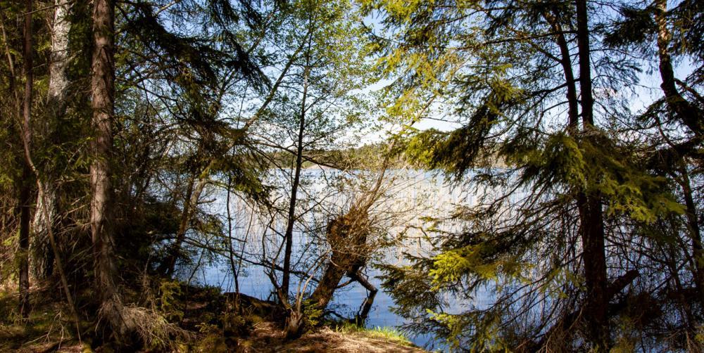 Låssaleden i Upplands-bro går med i skog men nuddar då och då Mälarens vatten