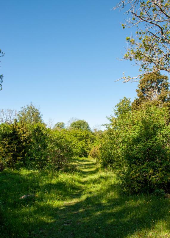 Vackra stigar i Riddersholms naturreservat