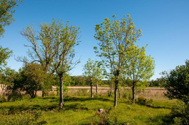 Riddersholms Naturreservat längst ut på Rådmansö är en pärla i Roslagen!