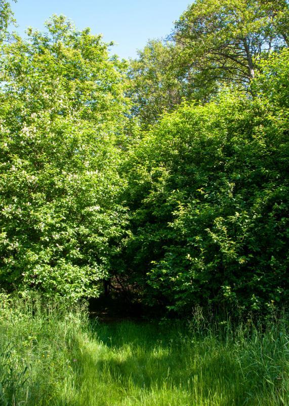 På Tjockö i Roslagens skärgård är det vackert och lummigt