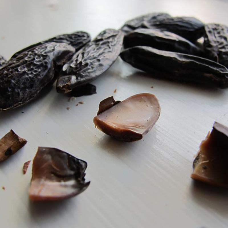 Bärnsten & Tonkaböna
