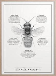 Poster 30x40 cm