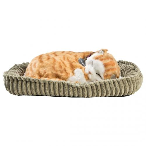 Perfect petzzz - Tabby katt orange