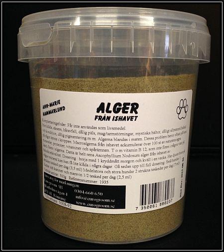 alger till häst