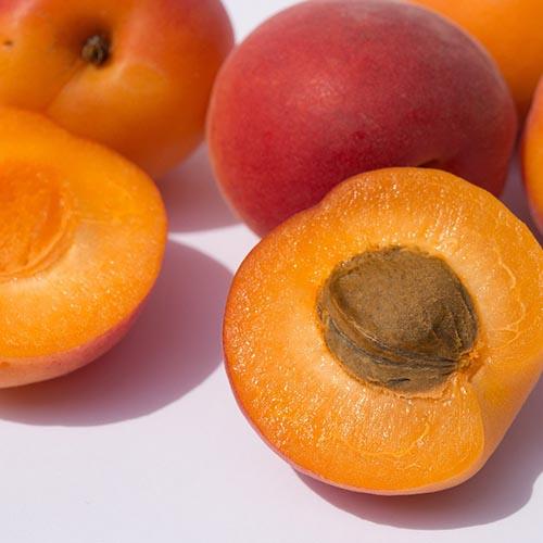 Apricot (CAP)