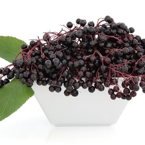 Elderberry (TFA)