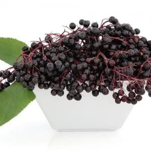 Elderberry (TFA)
