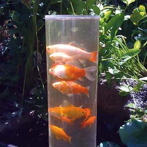 Fisktorn 66 cm