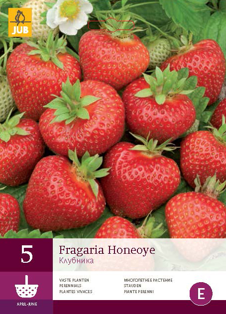 Fragaria (Jordgubbe) Honeoye