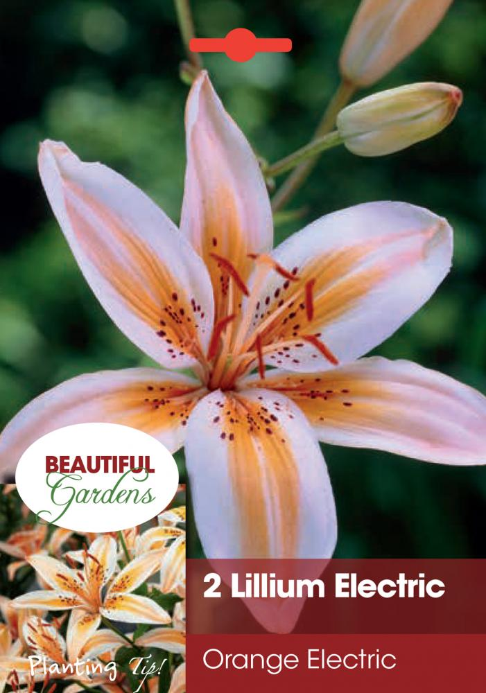 Lilium Electric Orange