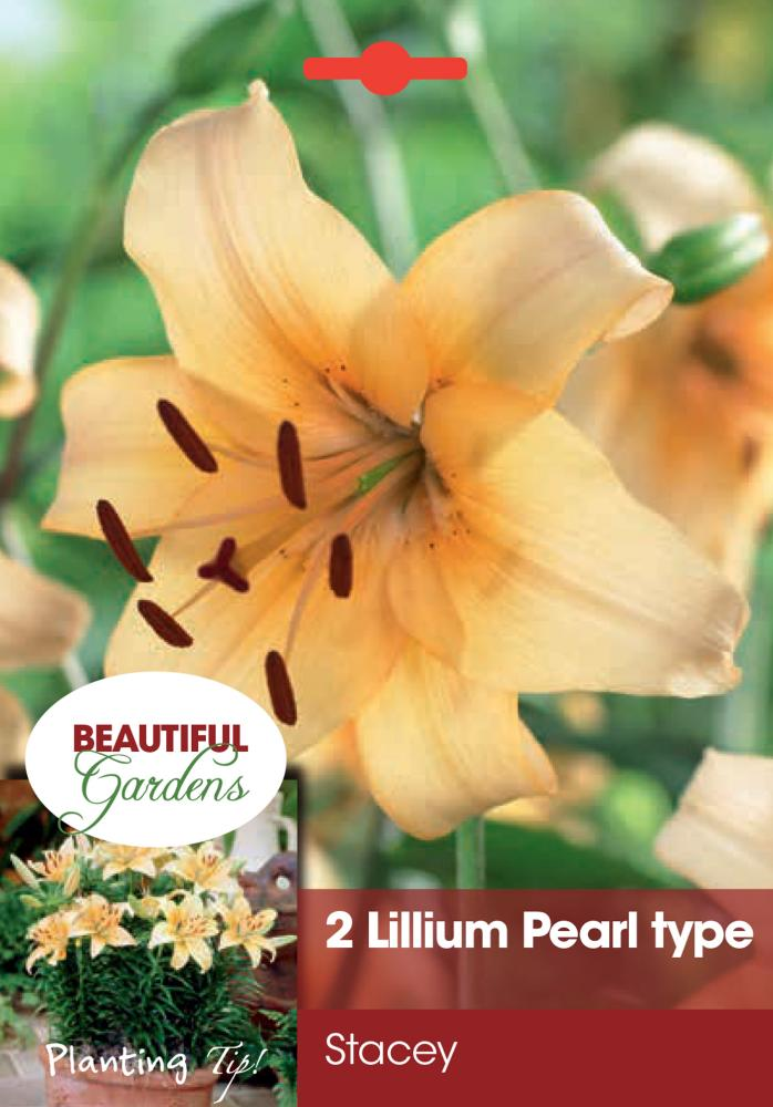Lilium Pearl Stacey
