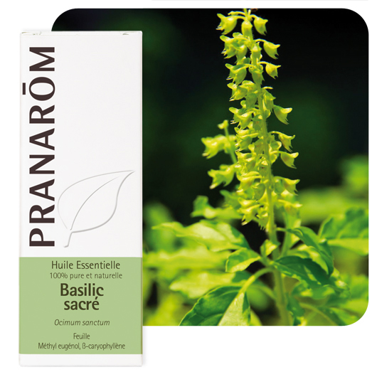 Pranarôm Holy basil essential oil (Ocimum sanctum) 5 ml
