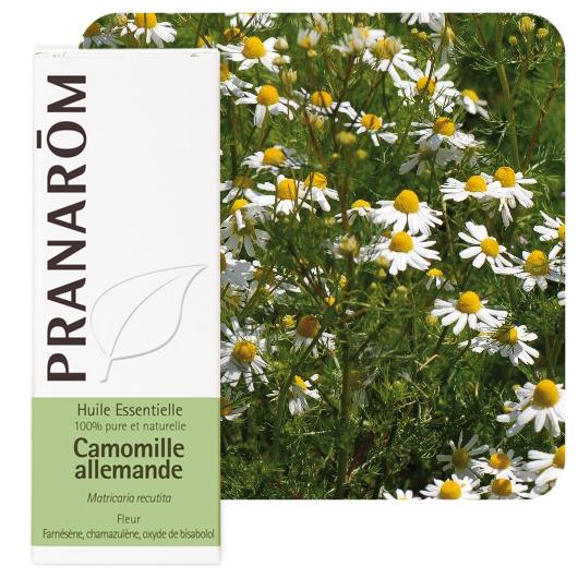 Pranarôm  German chamomile essential oil (Matricaria recutita) 5 ml