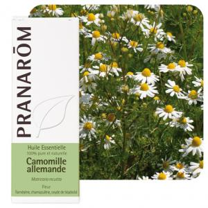 Pranarôm  German chamomile essential oil (Matricaria recutita) 5 ml