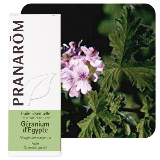 Geranium (egyptin) eteerinen öljy (Pelargonium x asperum) 10 ml