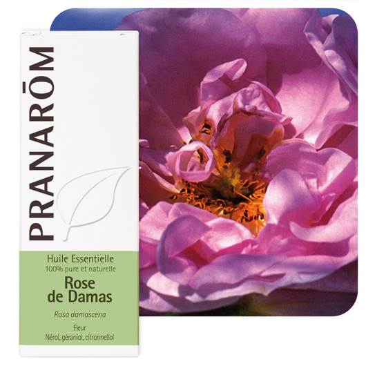 Pranarôm  Damask Rose essential oil (Rosa damascena) 2 ml