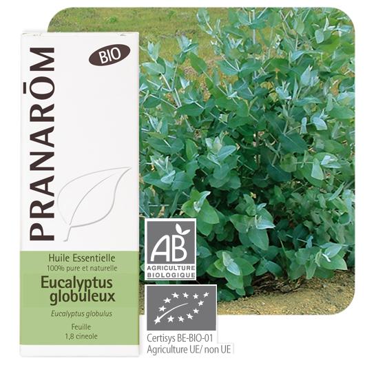 Pranarôm Eucalyptus globulus essential oil (Eucalyptus globulus) 10 ml