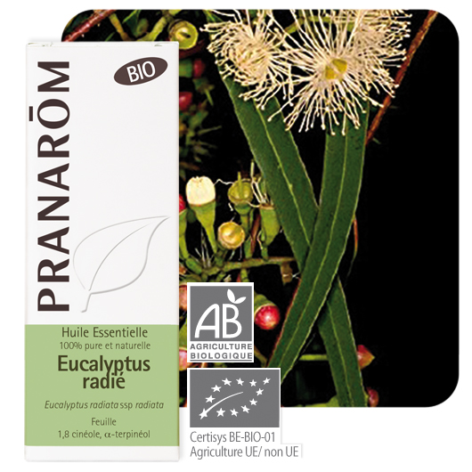 Pranarôm Eucalyptus radiata essential oil (Eucalyptus radiata ssp radiata) 10 ml