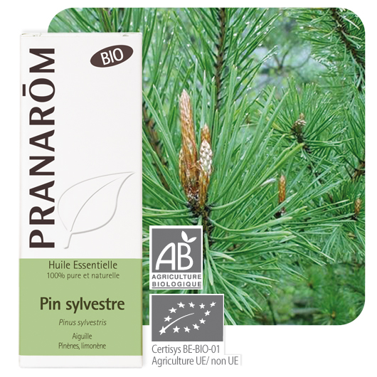 Pranarôm Scots pine essential oil (Pinus sylvestris) 10 ml