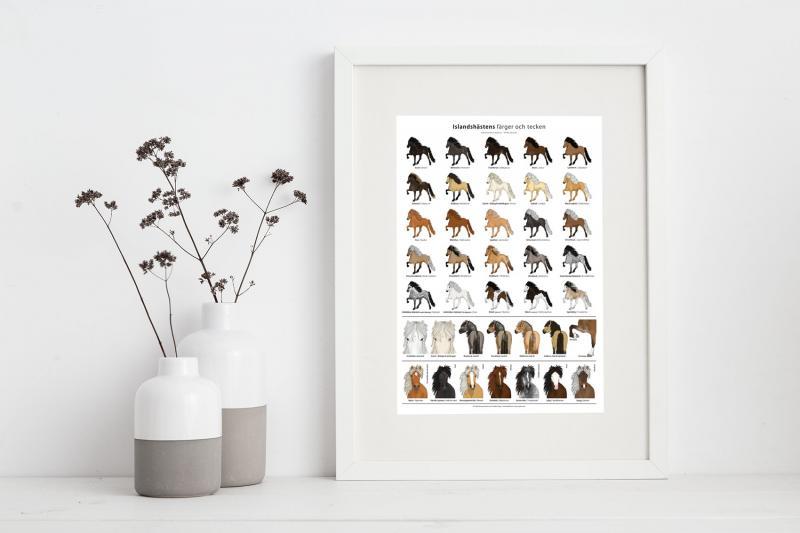 Poster Islandshästens färger