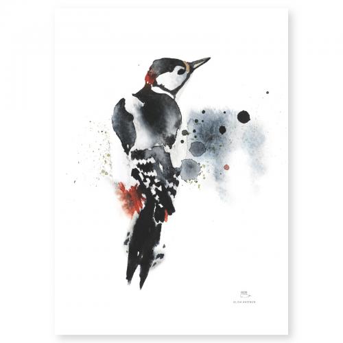 Poster från Ester Visual med motiv av en akvarellmålad hackspett 50x70 cm