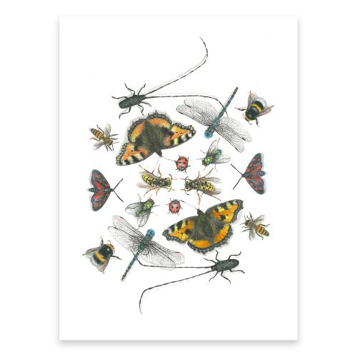 Poster svenska insekter