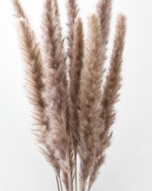 PAMPASGRÄS. Natural Brun. 60cm.