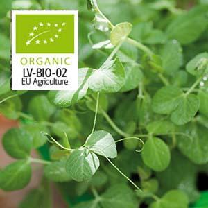 Ärta Micro leaf 5 eller 10-pack