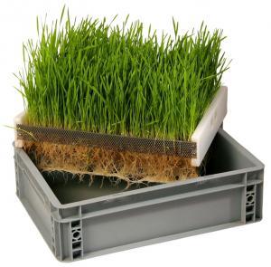 """Odlingstråg/Drivbänk system """"Mini"""" 40x30cm - med rostfri odlingsinsats"""