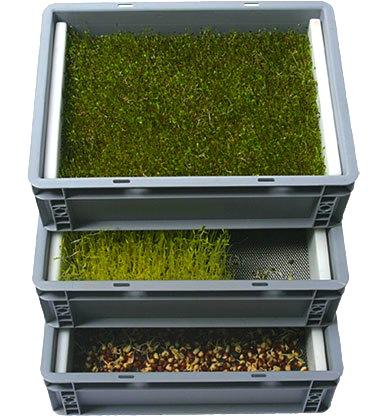 "Odlingstråg/Drivbänk system ""Maxi"" 60x40cm - med rostfri odlingsinsats"