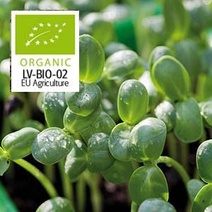 Solros micro leaf 5 eller 10-pack