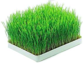 Råg gräs 2kg