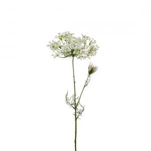 Allium Vit H70cm