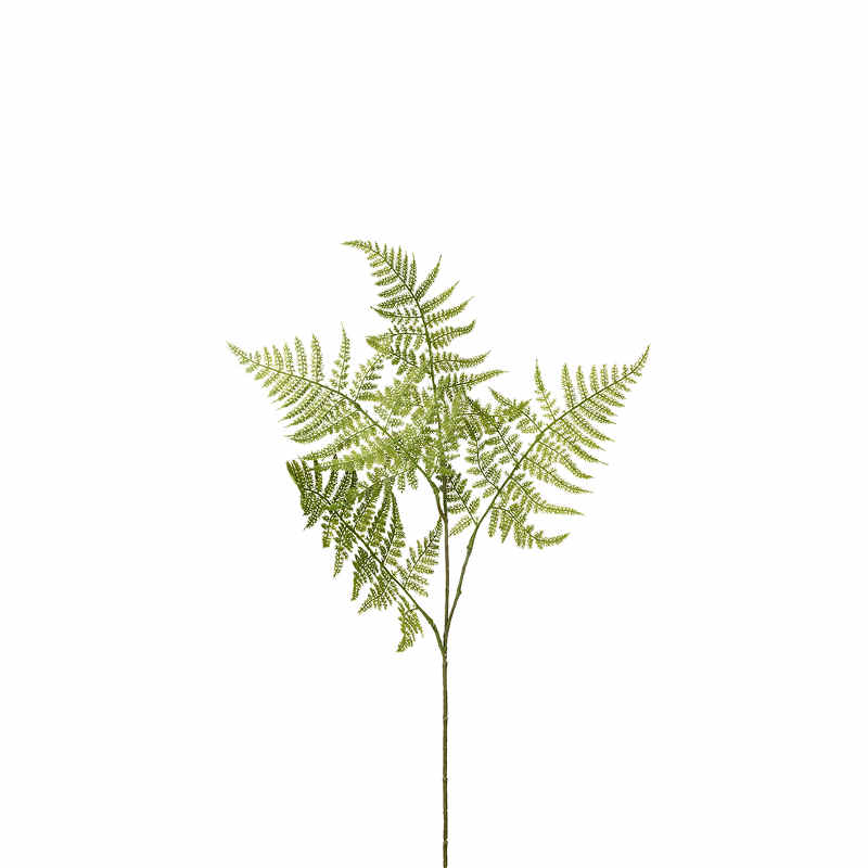 Asparagus H50cm Sparris släkt
