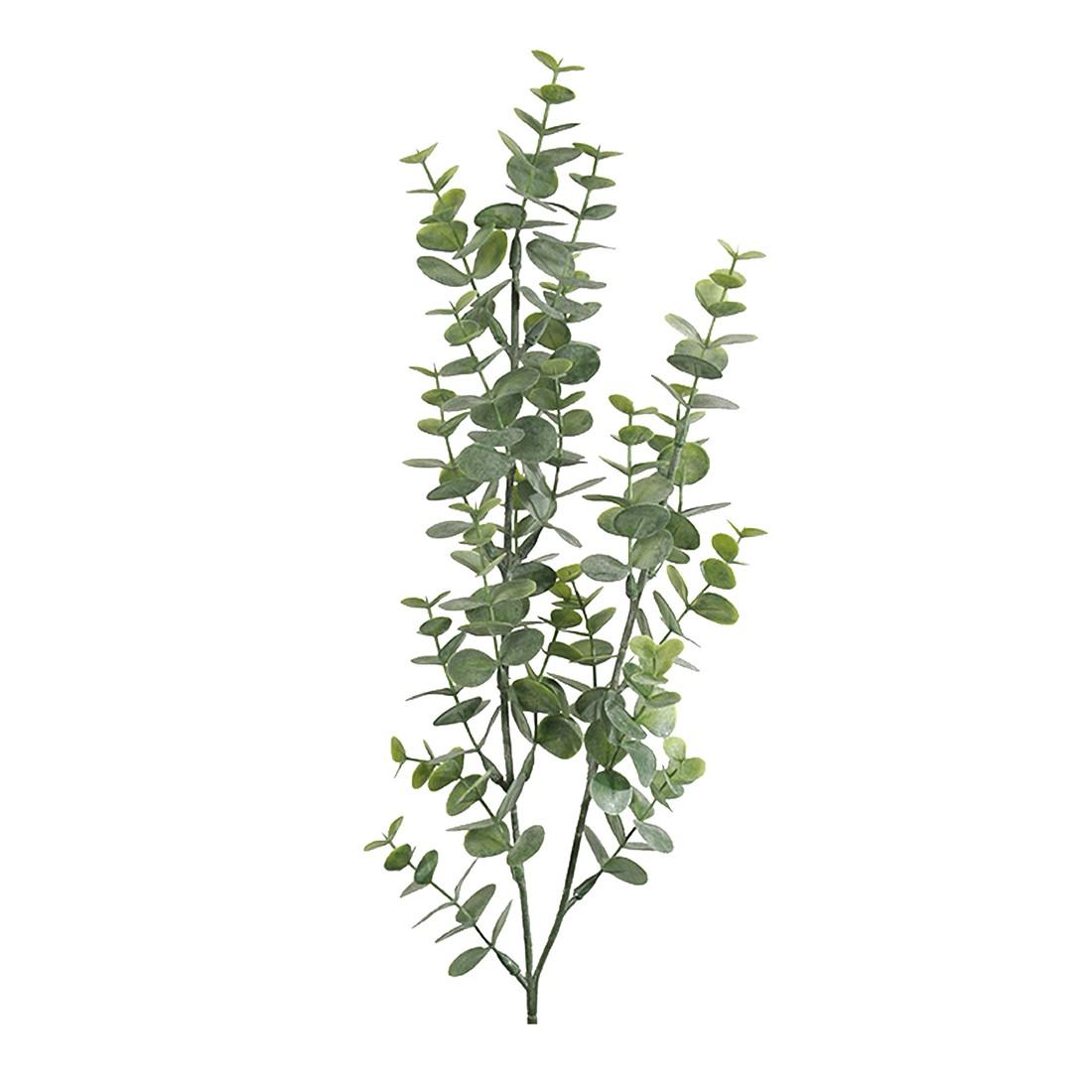Eucalyptus H74cm