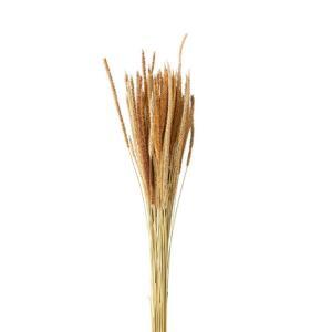 Grässtrå natur 70-80cm