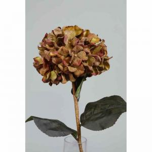 Hortensia torkad H75cm