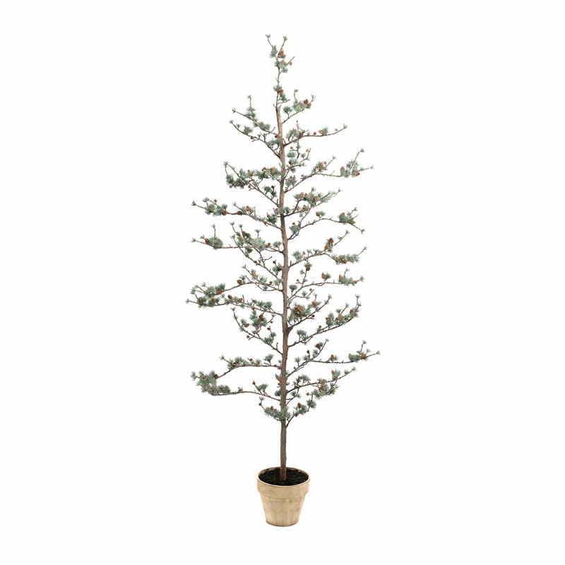 Lärkträd 180cm