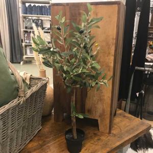 Olivträd H60cm