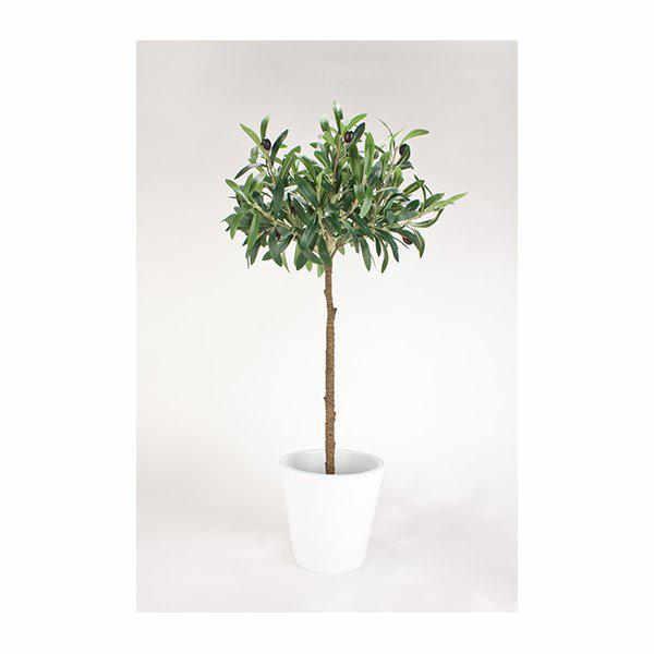 Olivträd 72cm
