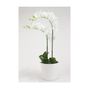 Orkidé 2stäng H68cm