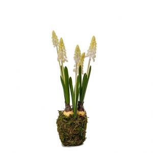 Pärlhyacint H25cm