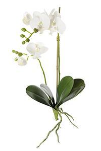 Orkidé vit H45cm