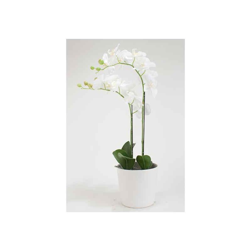 Orchidé 2stänglad