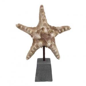 Sjöstjärna på fot H20cm