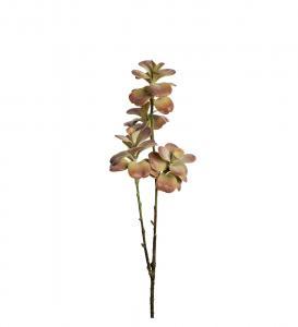 Succulent 50cm
