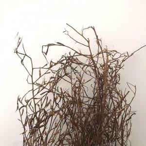 Torkade Avana gräs 70cm