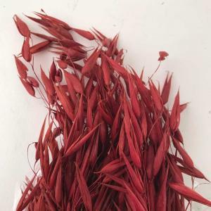 Torkade Job grass 60-70cm 100gr/bunt